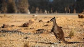 トップリーグがオーストラリア森林火災に対する募金活動実施へ