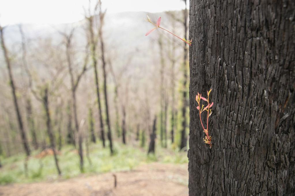 オーストラリア森林火災の復興支援へ150万円寄付 トップリーグ会場で募金活動実施
